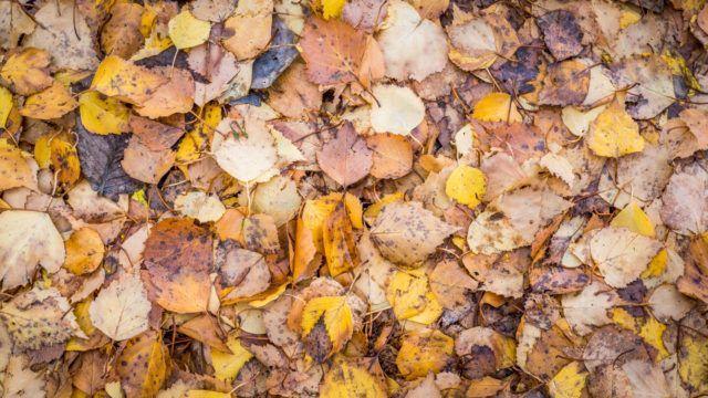Lehdet maassa syksyllä