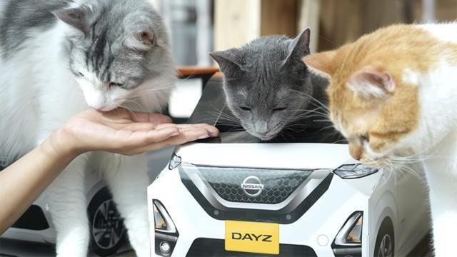 Nissan DayZ kissat kissakahvila