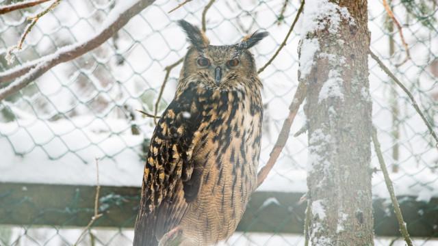 Ranuan eläinpuisto Ranua Zoo kotimaan helmi