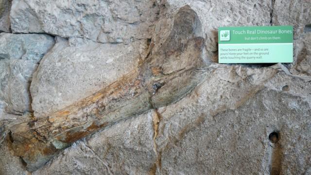 Se oikea Jurassic Park Dinosaur National Monument