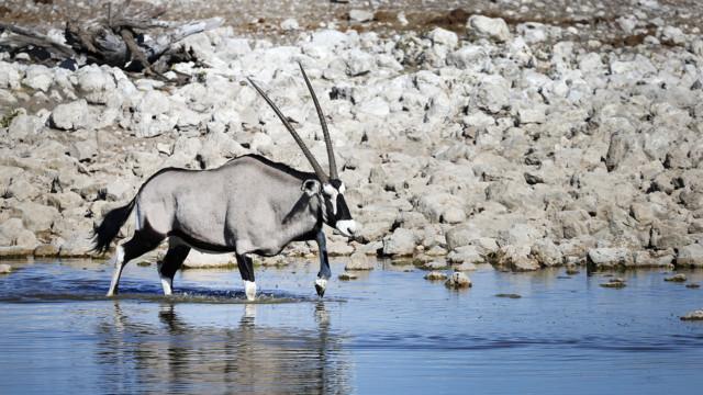 Afrikka safari Namibia